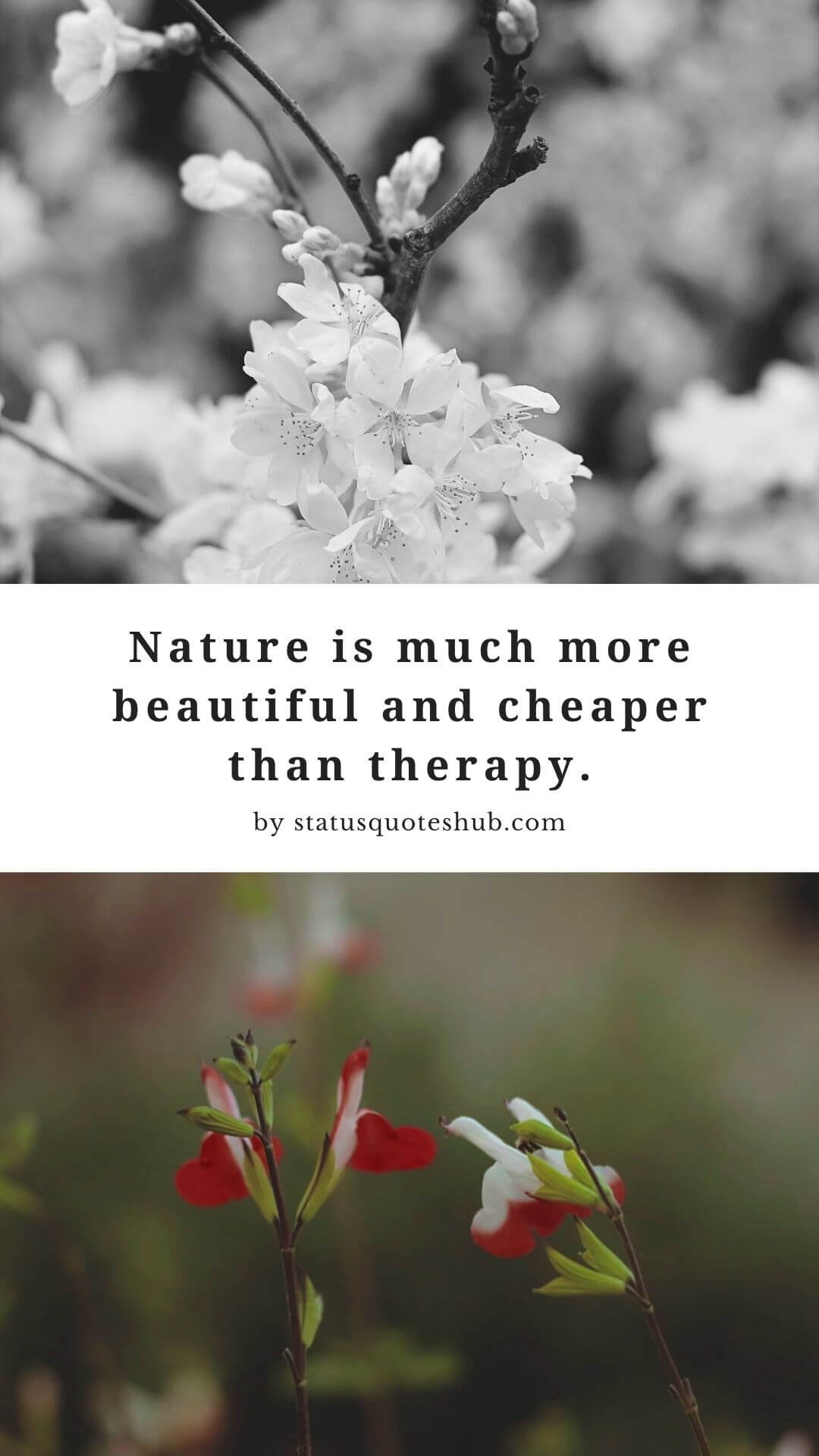 status for nature photography